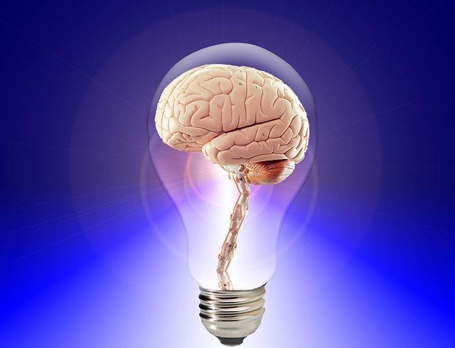 brain-20424_640.jpg