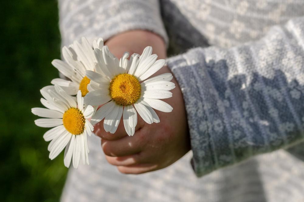daisies-3482335_1920.jpg