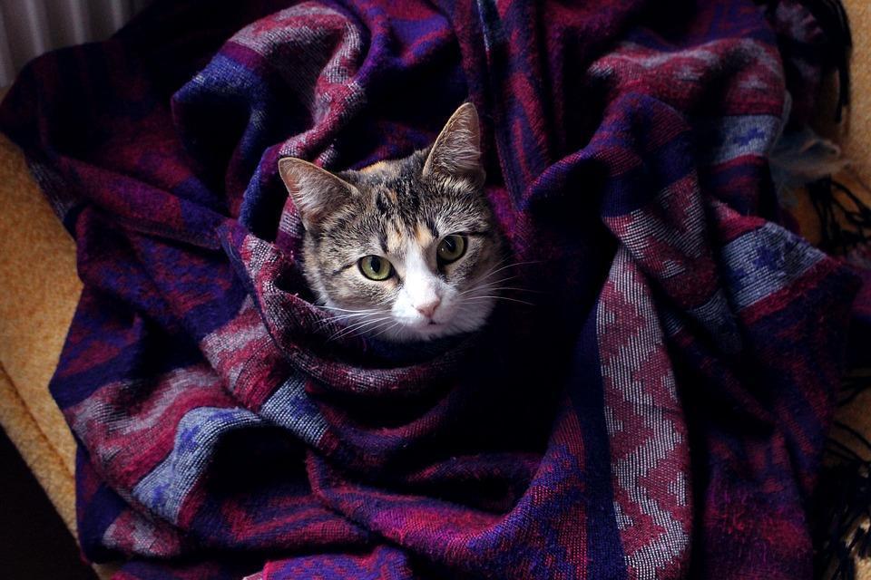 cat-2858202_960_720.jpg