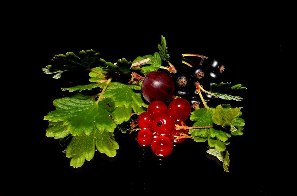 red-currant-179119_960_720.jpg