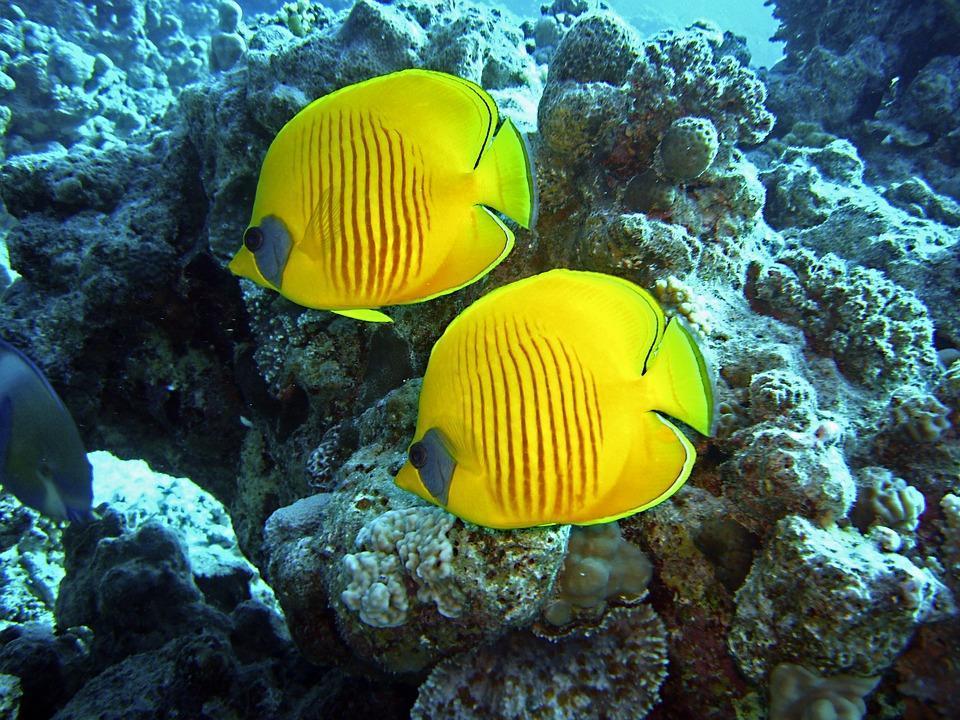 diving-1656619_960_720.jpg